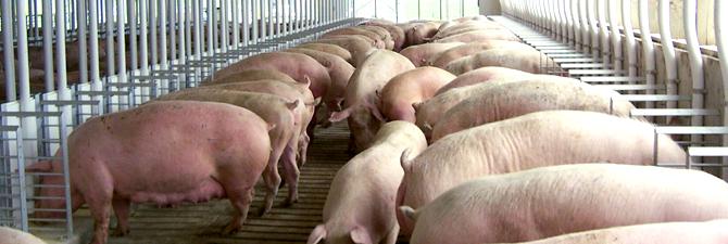 Nieuwsbrief Varkensbedrijf Winter 2016 – Aandacht voor het behoud van een goede maag- en darmwerking!