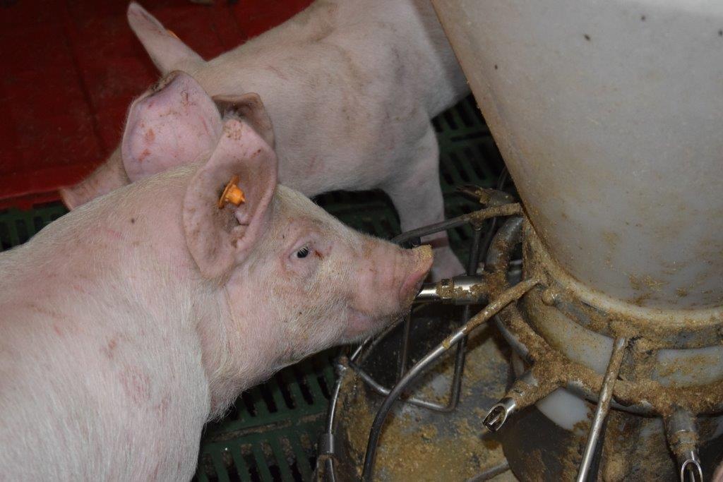Nieuwsbrief Varkensbedrijf Voorjaar 2017